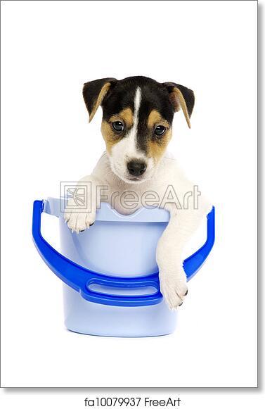 Free art print of Jack Russell Terrier