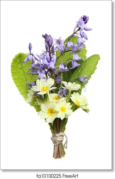Free art print of Posy of flowers. Posy of Spring wild flowers, bluebells and primrose isolated against white | FreeArt | fa10100225