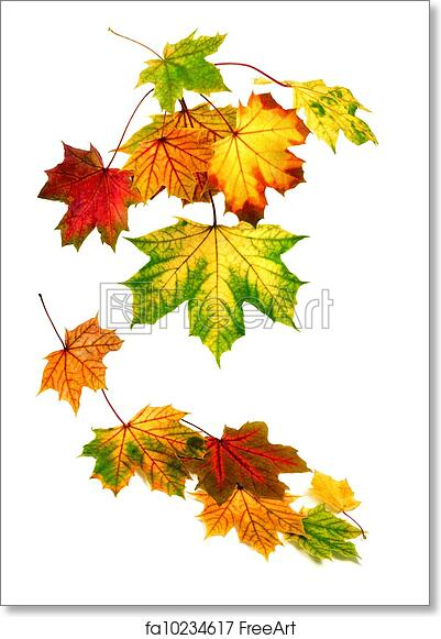 graphic regarding Printable Fall Leaves named Absolutely free artwork print of Vibrant autumn leaves slipping down