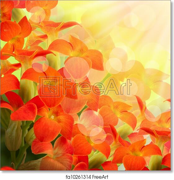 Free Art Print Of Red Flowers On A White Background A Spring