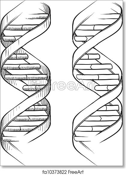 Free Art Print Of Dna Double Helix Sketch Doodle Style Genetic Dna