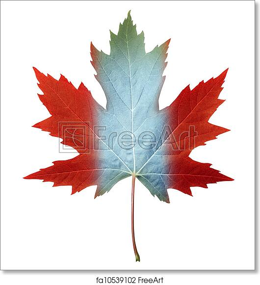 Free Art Print Of Canada Maple Leaf Canada Maple Leaf With The
