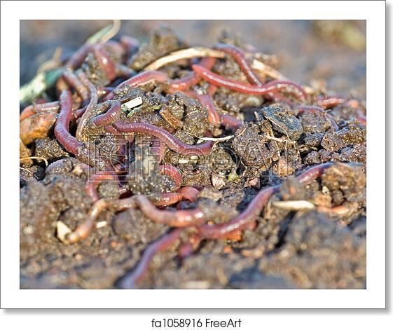 Free Art Print Of Garden Worms Large Pile Of Garden Or Compost