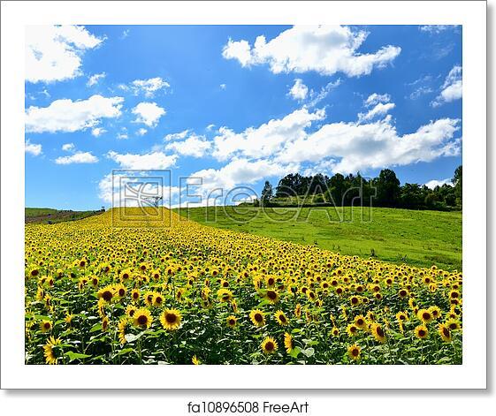 Hokkaido Landscape