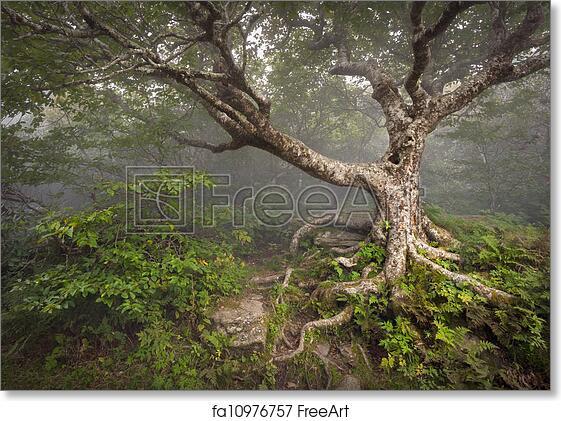 Free Art Print Of Creepy Fairytale Tree Spooky Forest Fog Appalachian Nc Fantasy Landscape At Craggy Gardens In The Blue Ridge Mountains Near