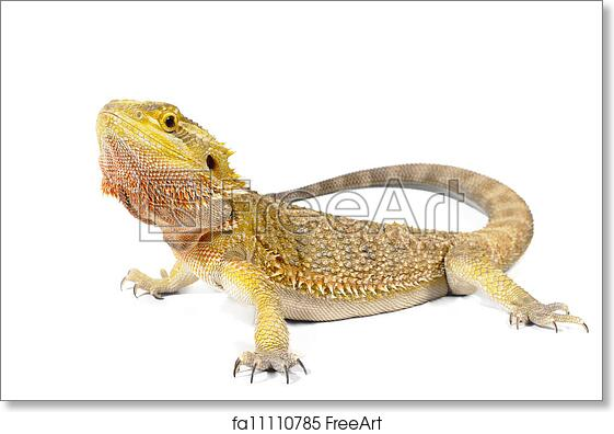 Free art print of Bearded Dragon