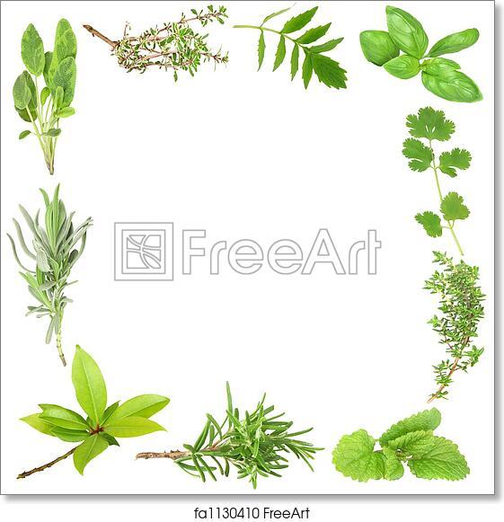 Free Art Print Of Organic Herbs Organic Herb Border Of Bay Leaves