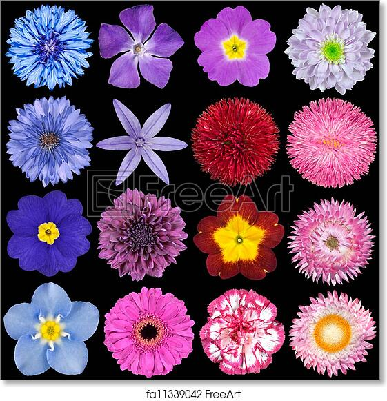 Free Art Print Of Various Red Pink Blue And Purple Flowers