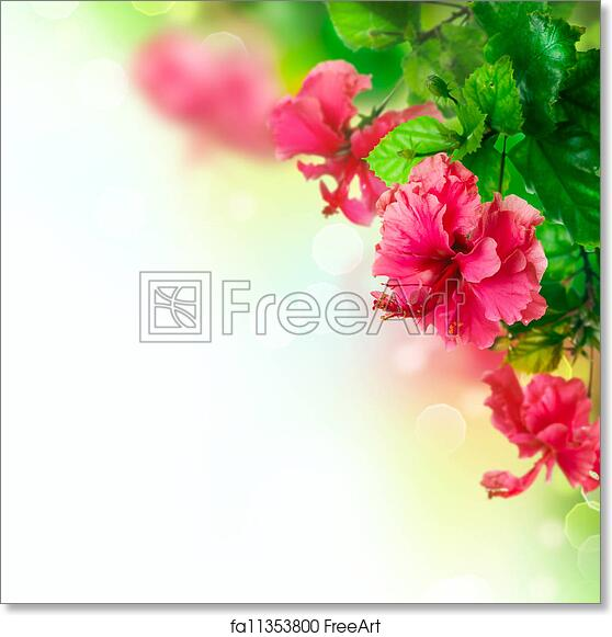 Free Art Print Of Hibiscus Flower Border Design Over White Freeart