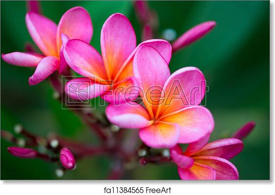 Free art print of branch of tropical pink flowers branch of free art print of branch of tropical pink flowers mightylinksfo