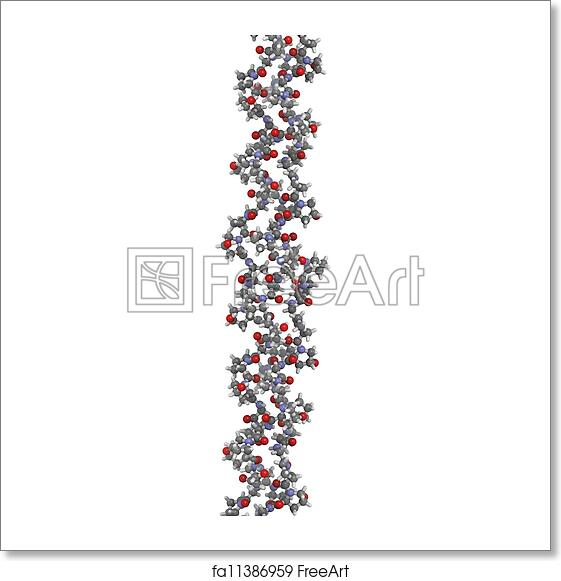 free art print of collagen model protein chemical structure