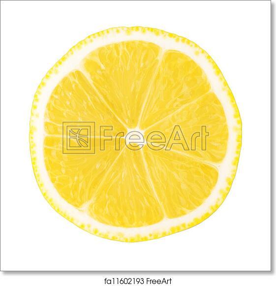 free art print of macro food collection lemon slice