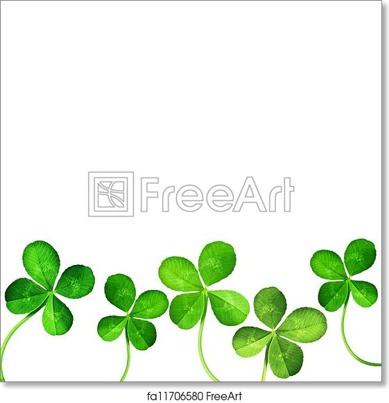 Free Art Print Of Four Leaf Clover Four Leaf Clover Isolated On