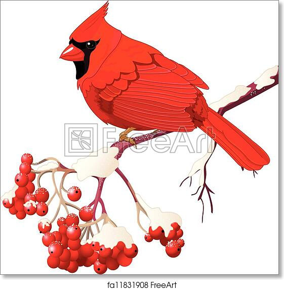 picture about Free Printable Pictures of Cardinals identified as Totally free artwork print of Crimson Cardinal chook