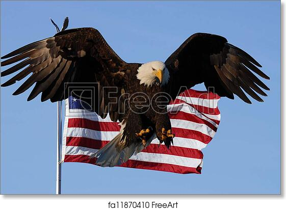 Free Art Print Of Bald Eagle American Flag Bald Eagle Landing With