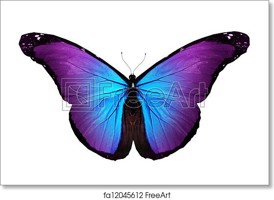 Turquoise Butterfly Flying Isolated Art Print Home Decor Wall Art Poster C