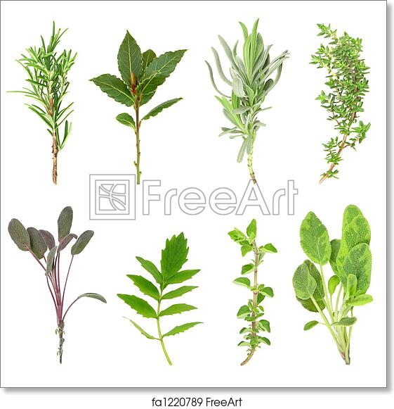 Free Art Print Of Fresh Herbs Herb Leaf Sprigs Of Rosemary Bay