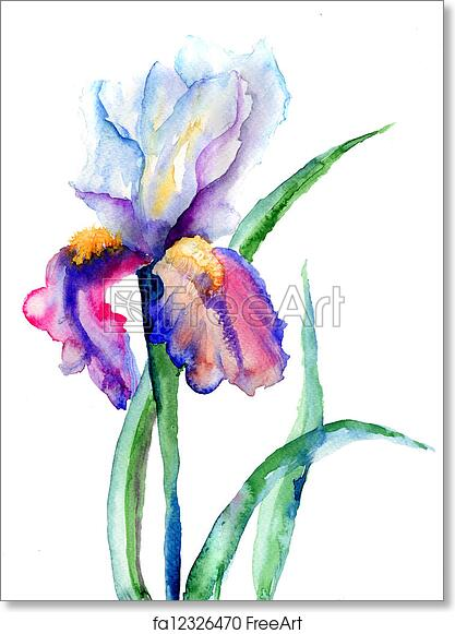 Free Art Print Of Iris Flowers Iris Flowers Watercolor