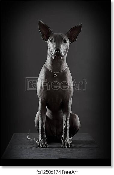 Free Art Print Of Mexican Hairless Xoloitzcuintle Mexican