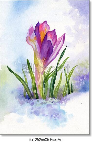 Free Art Print Of Spring Crocus Flowers In Snow Freeart Fa12526605