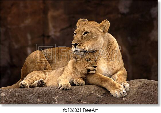 Lioness And Cub Art Print Home Decor Wall Art Poster C