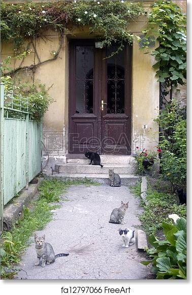 Cat in yard app