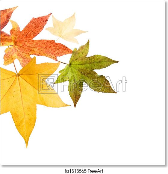 picture about Printable Fall Leaves named Absolutely free artwork print of Autumn slide Leaves