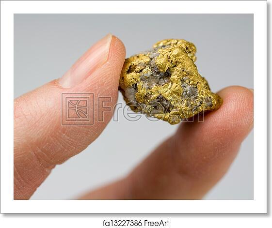 Free Art Print Of Nevada Usa Gold Quartz Nugget Nevada Usa Gold Quartz Nugget Held In Fingers Freeart Fa13227386