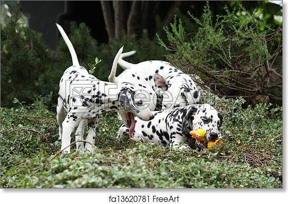 Free Art Print Of Dalmatian Puppies Playing In The Garden Gorgeous