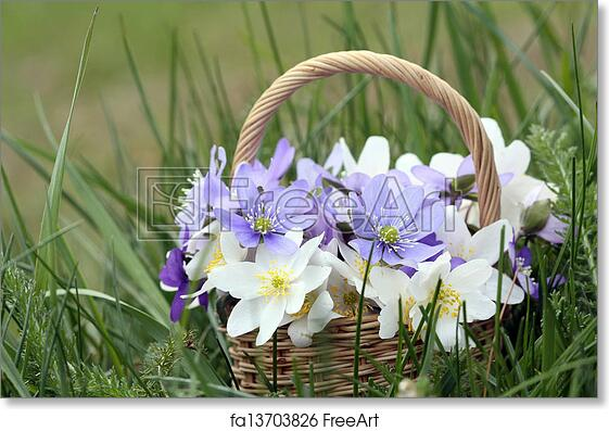 Free art print of basket of wild spring flowers basket of wild free art print of basket of wild spring flowers basket of wild spring flowers windflowers and liverworts freeart fa13703826 mightylinksfo