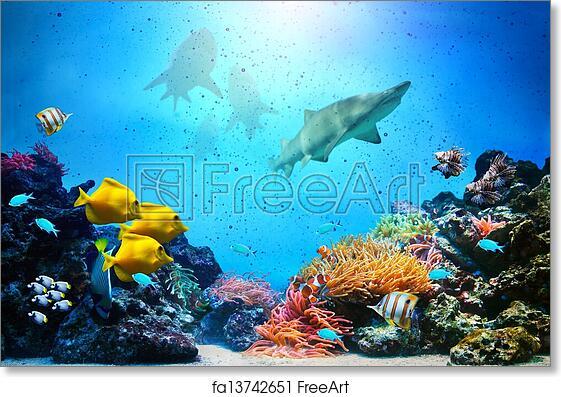 Free Art Print Of Underwater Scene. Coral Reef, Fish