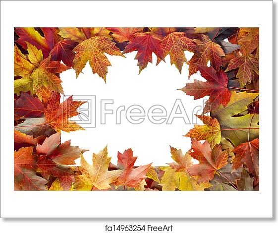 Free Art Print Of Colorful Maple Tree Fall Leaves Border Colorful Autumn Maple Tree Fall Leaves Border With White Blank Center For Text Freeart Fa14963254
