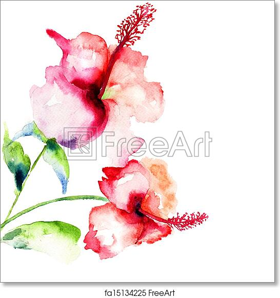 Free Art Print Of Red Hibiscus Flowers Red Hibiscus Flowers