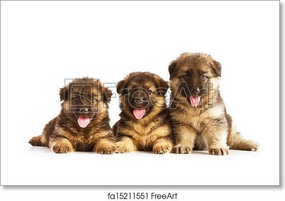 Free Art Print Of Three German Shepherd Puppies German Shepherd