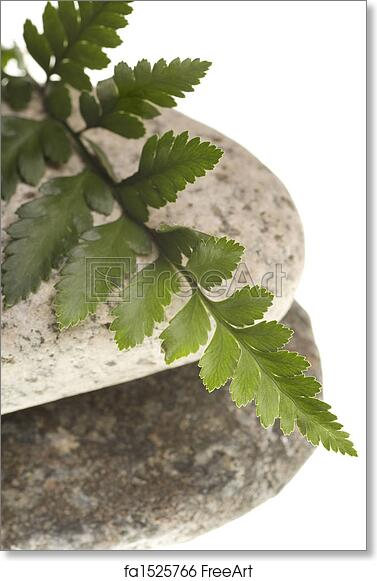 Free art print of River rocks and fern isolated