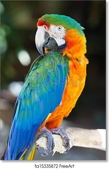 free art print of blue yellow macaw parrot bird colorful parrot