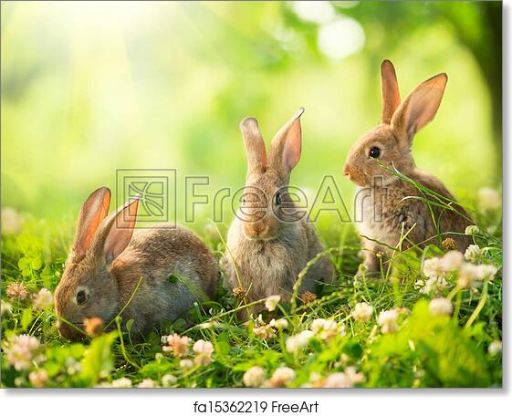 https://images.freeart.com/comp/art-print/fa15362219/rabbits-art-design-of-cute-little-easter-bunnies-in-the-meadow.jpg