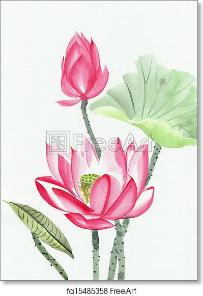 Free Art Print Of Watercolor Painting Of Pink Lotus Flower Original