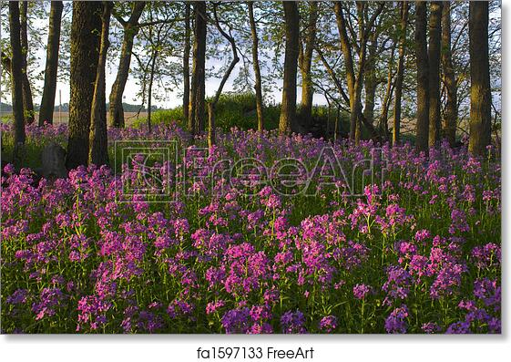 Free art print of pink wild flowers and forest pink spring wild free art print of pink wild flowers and forest mightylinksfo