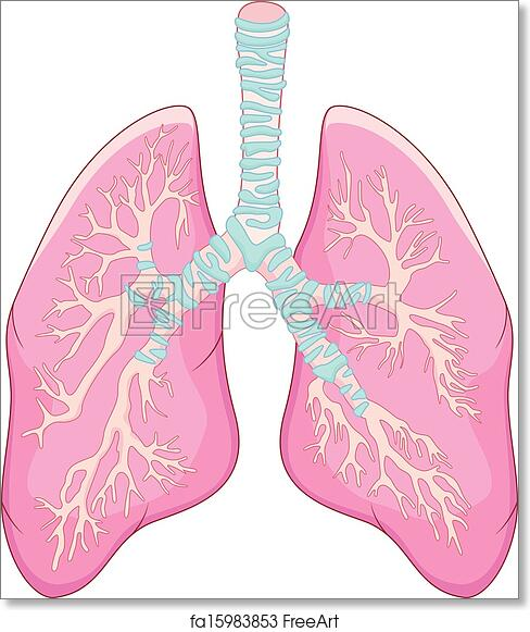 Free Art Print Of Human Lung Anatomy Vector Illustration Of Human