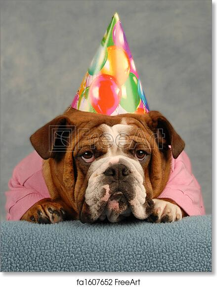 Free Art Print Of Birthday Dog English Bulldog Dressed Up Pink Sweater And Hat