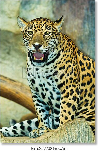 Free Art Print Of Jaguar And Lived In Central America And South America