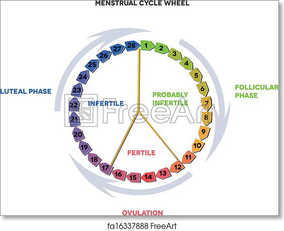 graphic about Menstrual Calendar Printable named Cost-free artwork print of Menstrual calendar