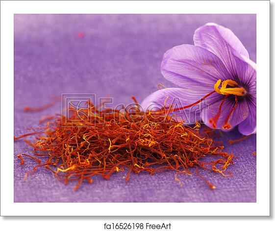 Free Art Print Of Dried Saffron Spice And Saffron Flower Freeart
