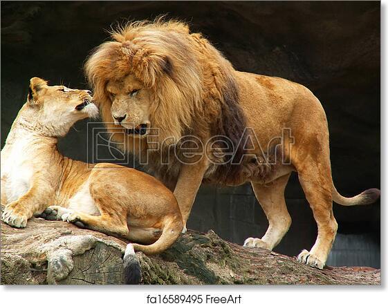 Free art print of Lions couple