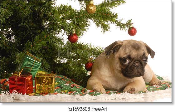 Free Art Print Of Pug Puppy Under Christmas Tree Cute Fawn Pug