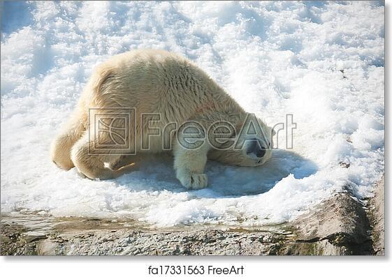 Wall Art Canvas Picture Print Polar Bear 3.2