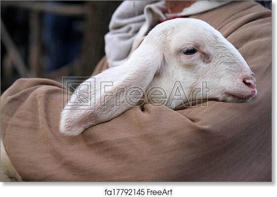 Free art print of Lamb with shepherd