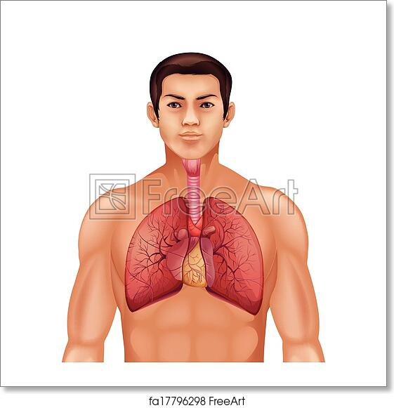 Free art print of Human respiratory system. Illustration of the ...