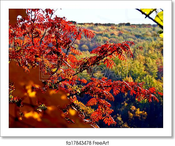 Free Art Print Of Leaves Of Acacia On A Background Autumn Forest